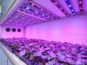 Japan use the best led grow light to shorten the 1/3 of the lettuce growing season