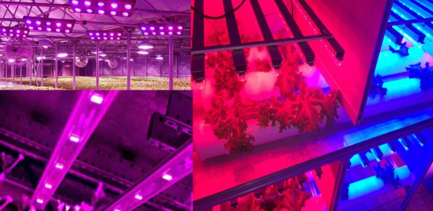 Horticultural lighting industry will be a new LED lighting industry opportunities