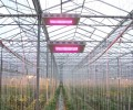 illuminator led grow lights are rising
