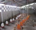 The advent of domestic t5 high bay poultry lights
