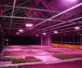 Chinese decoding of led aquarium lighting in plant-lighting market