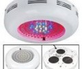white led grow lights with the LED Lighting development