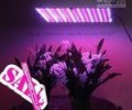 what are the best led grow lights in printing