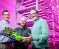 LED plant lighting intelligent control strategy