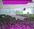 LED grow lighting demand have a huge increase in North American