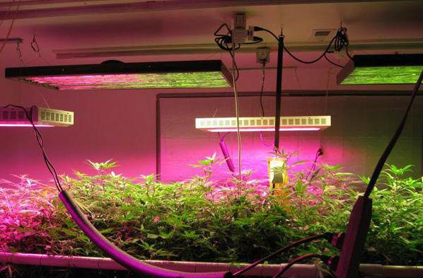 Led Grow Lights Provide Sunlight For