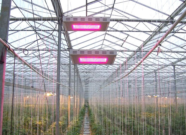 illuminator led grow lights are rising