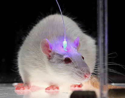 LED lighting is expected to treat Neurological diseases