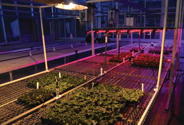 Choose the right lighting for your greenhouse
