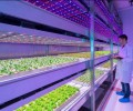 Smart LED lighting from home to agriculture and business
