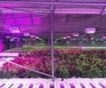 Nichia joins Dutch agricultural company to develop LED horticultural lighting market