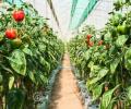 LED lights light up high-value agricultural prospects