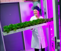 Sweden IKEA grows lettuce in containers