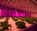 LED grow lights are the mainstream in the future