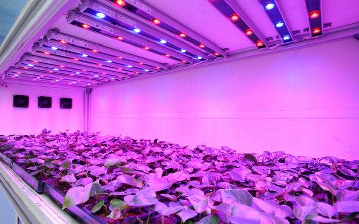 Panasonic Vegetable Plants Enabled Led