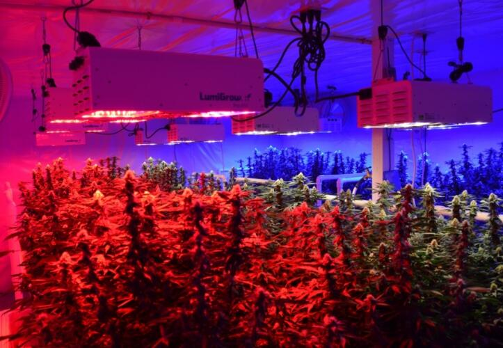 Led Grow Light Greenhouse Plant Lications Eneltec Group