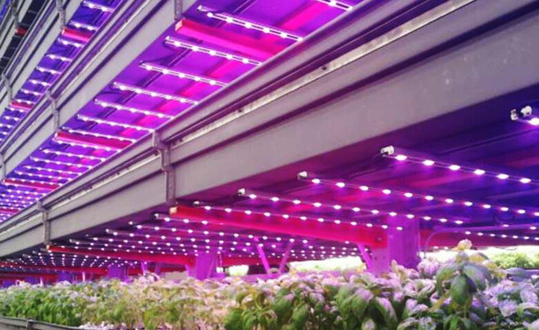 LED grow lights seize $ 60.65 billion from global garden market