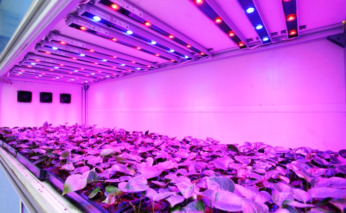 LED market lighting for horticultural plants