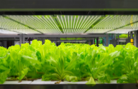 2050 LED lighting helps to feed 10 billion people?