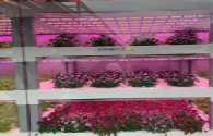 """Chinese plant factories """"light up"""" the way for capital"""