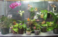 Clean room with LED lighting to cultivate orchids