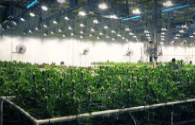 ENELTEC is optimistic about the LED plant lighting market