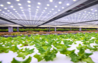 Europe's largest vertical farm appeared