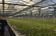 Fluence, a plant lighting company under Osram, wants to expand its EMEA business