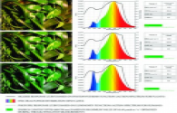 In-depth discussion of the secrets of LED plant light spectral data