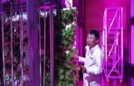 Korea built the world's first tunnel LED lighting vertical farm