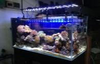 Kyocera developed a full spectrum LED aquarium lighting