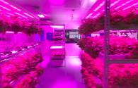 LED plant lighting becomes standard for smart plant factories