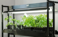 LED plant lighting is beneficial to greenhouses, but standards need to be improved