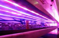 LED plant lighting power business detonates performance