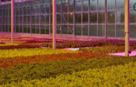 LED plant lighting promotes the optimization of local planting structure