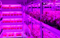 LED vertical farm flourishes