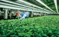 Plant lighting LED output value increased by nearly 40% annually