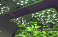 Research on Plant Lighting Technology