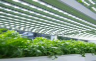 Smart growth box equipped with LED lighting to grow perfect plants