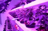 Swedish vertical farm buys LED growth lights from Heliospectra