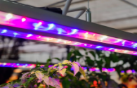The LED plant lighting market will continue to grow