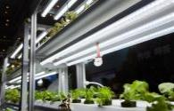 The global LED plant lighting system market will exceed 2 billion US dollars