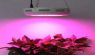 A domestic LED hydroponic lamp string exported to the UK was recalled due to quality problems