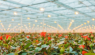 Application of LED fill light in facility horticulture and its effect on crop growth