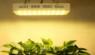Application of full-spectrum LED lamps