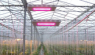 ENELTEC go to agriculture LED lighting market