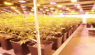 Research shows that full-spectrum LEDs are superior to standard LED lighting
