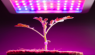 Why the LED plant light can shorten the plant growth cycle