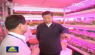 Xi Jinping visited the LED plant factory