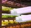 T8 LED Grow Tubes